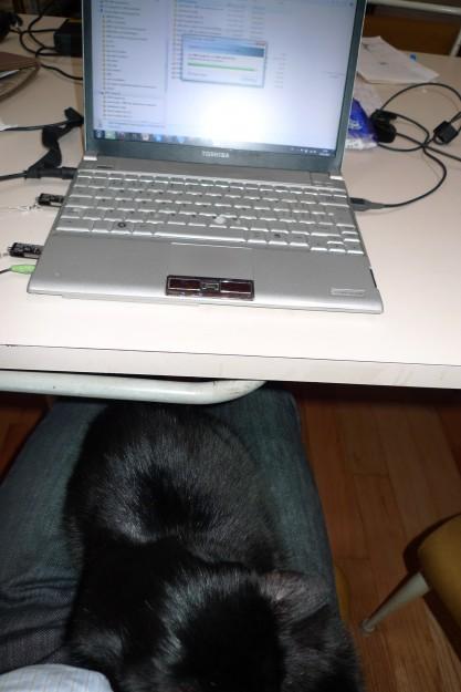 Tippen mit Katze auf dem Schoss.